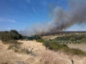 Un incendio calcina unas 230 hectáreas en dos fincas de Romangordo